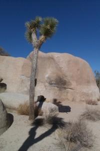 Joshua,Tree,bloc,bouldering,bloque